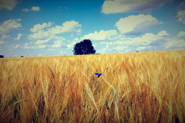 27.07.14 Monika Kuzmina_Kuidas ma armastan ilu meie ümber ja meie imeilusat Eestimaad